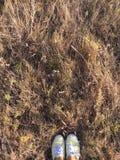 Braunes trockenes Gras des Herbstes auf einem Gebiet Lizenzfreie Stockfotos