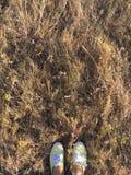 Braunes trockenes Gras des Herbstes auf einem Gebiet Lizenzfreies Stockfoto