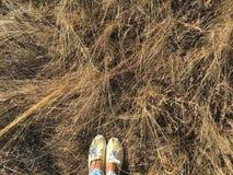 Braunes trockenes Gras des Herbstes auf einem Gebiet Stockbilder