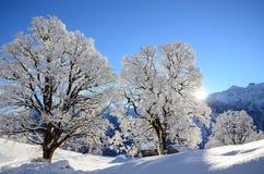 Braunwald w Szwajcaria Śnieżnych Bożenarodzeniowych górach Fotografia Royalty Free
