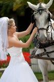 Braut mit Pferden Stockfoto