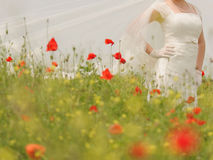 Braut in Poppy Field Stockbilder