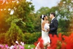 Braut und Bräutigam in einem grünen Park Stockbilder