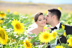 Braut und Bräutigam in einer schönen hellen Holding umarmen Stockfotografie