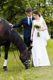 Braut und Bräutigam stehen im Park nahe dem Pferd und heiraten Weg Weißes Kleid, glückliches Paar mit einem Tier Grüner Hintergru Stockfotografie