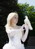 Braut und Taube Stockbild