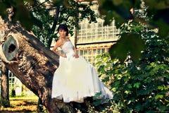 Braut wirft auf einem Baum im Garten auf stockbilder