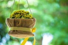 Brautduschblumen Stockbild