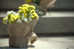 Brautduschblumen Lizenzfreie Stockbilder