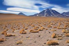 Brava de Paja en el desierto de Atacama, Chile Foto de archivo