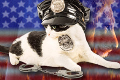 Brave Cop Cat Stock Photo