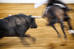 Brave bull chasing horse during a bullfight Stock Image