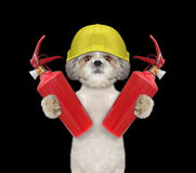Brave firefighter dog is ready to work. On black Royalty Free Stock Image