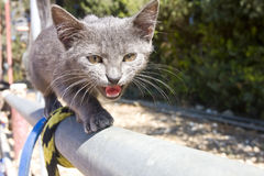 Brave kitten on the fence Royalty Free Stock Photo