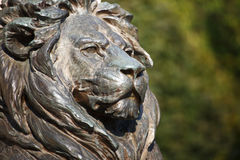 Brave lion head Stock Images