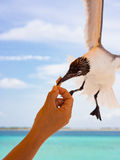 Brave seagull Royalty Free Stock Photography