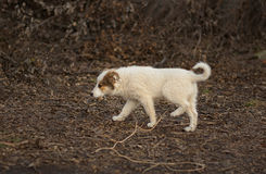 Brave stray puppy in search of mom. Walking through sinister place Stock Images