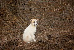 Brave stray puppy sitting in sinister place Royalty Free Stock Photography