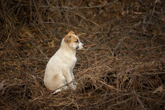 Brave stray puppy sitting in sinister place Royalty Free Stock Image
