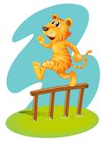 A brave tiger jumping over the wooden fence Royalty Free Stock Image