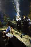 Brave tourist diving in ocean aquarium Stock Images