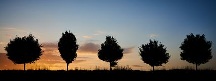 Free Brave Trees Guarding Their Field From Sun Stock Photography - 116324522