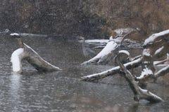 Braving a tempestade Foto de Stock