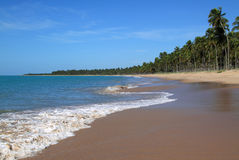 Brazil Alagoas State Maceio  palm lined beach. Brazil Alagoas State Maceio idyllic deserted tropical palm lined beach Royalty Free Stock Photo