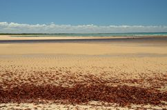 Brazil Beach. Beach located at Ponta do Corumbau city, Bahia Estate, Brazil Stock Images