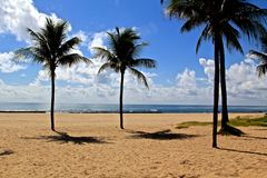 Brazil beach. Beach in the north of Brazil Royalty Free Stock Photo