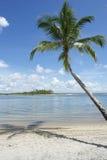 Brazil Beach Palm Tree Nordeste Bahia Stock Photo