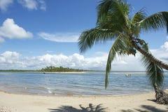 Brazil Beach Palm Tree Nordeste Bahia Stock Photos