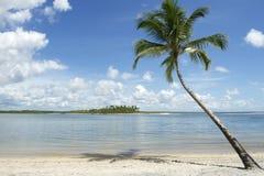Brazil Beach Palm Tree Nordeste Bahia Royalty Free Stock Image
