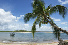 Brazil Beach Palm Tree Nordeste Bahia Stock Image