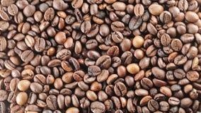 Brazil Bio Coffee beans. Brazil Bio Coffee for restaurant stock video footage