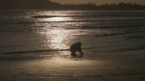 brazil buzios arkivfilmer