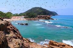 Brazil coast Stock Photography