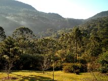 Brazil Countryside Forest Landscape Royalty Free Stock Image