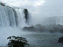 brazil faller iguassuen Arkivfoton