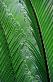brazil fern Royaltyfri Fotografi