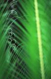 brazil fernjätte Arkivbild