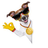 Brazil  fifa world cup  dog Royalty Free Stock Photography