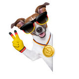 Brazil  fifa world cup  dog Stock Image