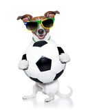 Brazil  fifa world cup  dog Stock Photo