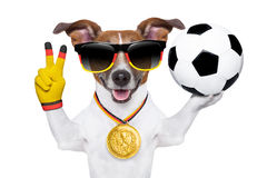 Brazil  fifa world cup  dog Royalty Free Stock Images