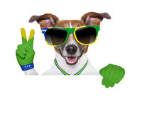 Brazil  fifa world cup  dog Stock Photography