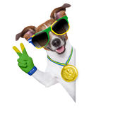 Brazil  fifa world cup  dog Royalty Free Stock Photos