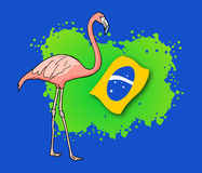 Brazil flamingo Royalty Free Stock Images