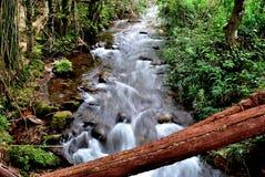 Brazil forest. Forest at valleys. Gandarela hill. Minas Gerais Estate, Brazil Royalty Free Stock Photos