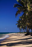 Brazil Maceio Gunga Beach Royalty Free Stock Image